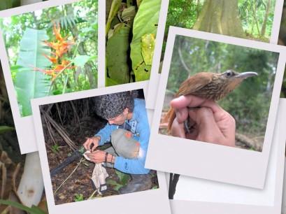 biodiversidad de Panamá