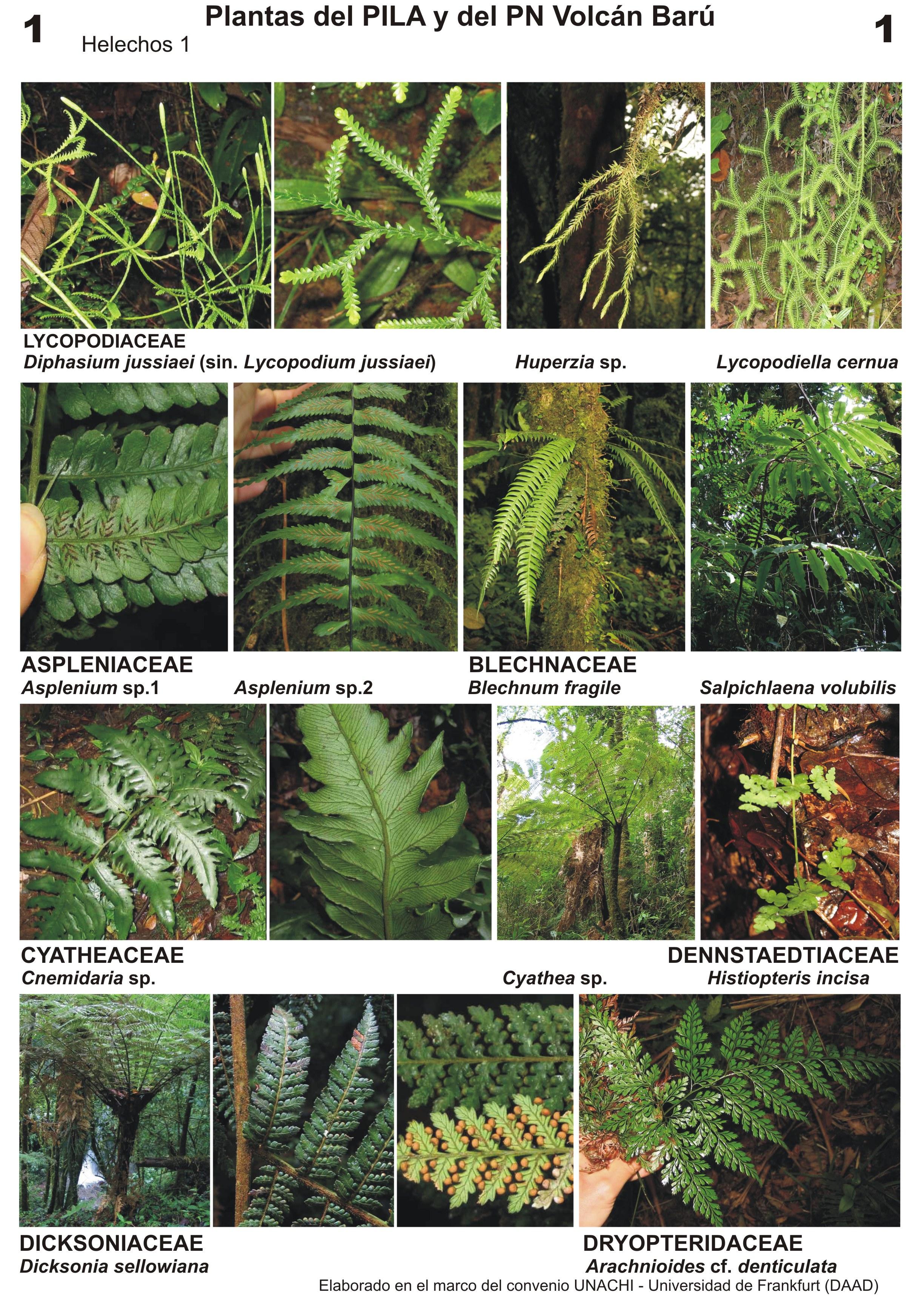 Gu as de plantas del parque internacional la amistad for Plantas ornamentales para parques